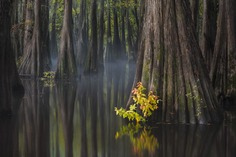 Southern USA by Thorsten Scheuermann