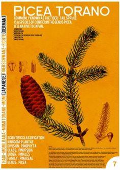 Picea Torano - Society6 #design #graphic #page