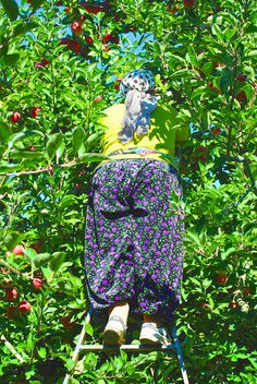 Egridir apple picker in orchard | Flickr - Photo Sharing! #apple #pattern #turkey #walby #photography #orchard #david #wall-b #green