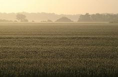 All sizes | Field - Sunny Morning | Flickr - Photo Sharing! #landscapes