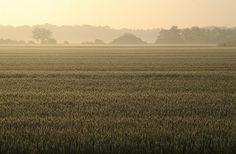 All sizes | Field - Sunny Morning | Flickr - Photo Sharing!