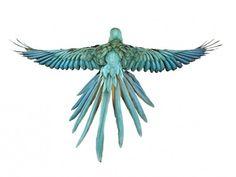 Andrew Zuckerman. Bird. | A Photography Blog