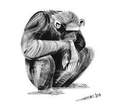 pingszoo #ny #times #sketch #monkey