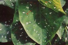 leaf~