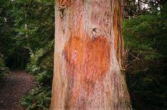 Camp Doug / Perceptions of Graphic Design School #heart #tree #photography #nature #love