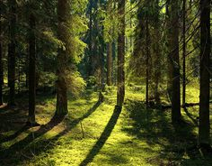 Nature Photography by Andrey Kozlov