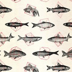 tumblr_inline_mmv3ve3FPk1qz4rgp.jpg (500×500) #illustration #fish #pattern