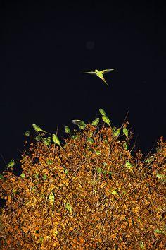 yoshinori mizutani; http://off-the-wall-b.tumblr.com/tagged/animalistic #yoshinori #illustration #mizutani #bird