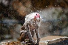 Navid Baraty Photography #baraty #photo #navid #monkey #photography #japan