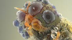 Amazing macro photography of insect eyes