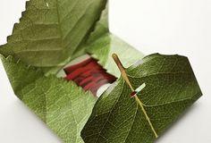 final major project: dcOUGD303 #prime #leaf #packaging #nature #film #numbers #solitude #leaves