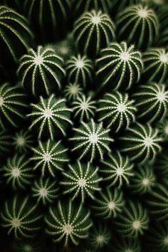 Tumblr #cactus