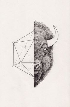 Peter Carrington #inspiration #geometry #illustration #art #animal
