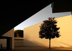 Minimalist design celebrated and curated by Minimalissimo #architecture #tree #museum