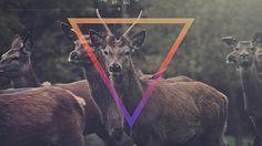 Matta - Release The Freq | Flickr - Photo Sharing! #matta #design #video #photography #music