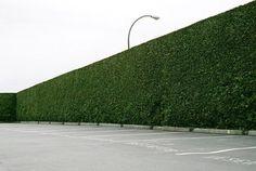 jmarigomen-botan-07_1200-610x412.jpg (JPEG Image, 610x412 pixels) #green #plants #landscape