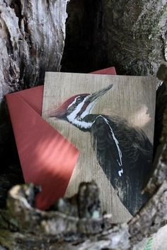 Snail's Pace Pileated Woodpecker Illustration - Note Cd #pace #pileated #woodpecker #snais #stationery #paper