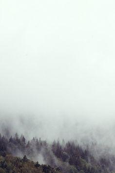 juni11_06.jpg (JPEG-Grafik, 683x1024 Pixel) #fog #jochen #black #wood #forest #pach