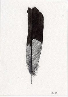 FFFFOUND! | Tumblr #feather