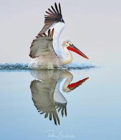 #bestbirdshots: Attractive Birds Photography by Petr Bambousek