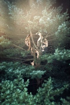 Ryan McGinley #mcginleytree #3 #ryan #2003