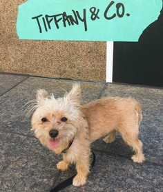 Most Dog Friendly Stores in America - Tiffany & Co.