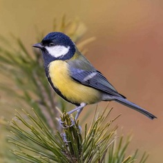 #planetbirds: Colorful Birds Photography by Rob van Mourick