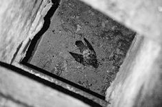 noel richter.photoblog #photo #analog #bird