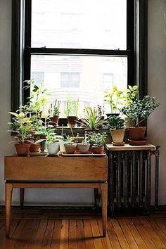 http://b-u-i-l-d.tumblr.com/ #plants