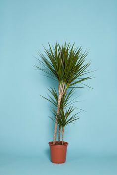 _mg_1508 #photography #plant
