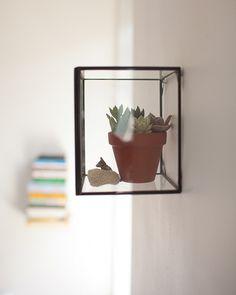 9lotta #succulent #plant
