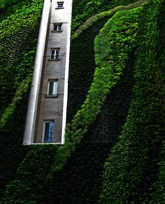 CJWHO ™ (Vertical Garden by Patrick Blanc) #design #interiors #botanic #photography #architecture #nature #art #garden #green
