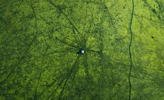Gorgeous Scenes Of Bangladesh From Above by Shamim Shorif Susom
