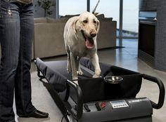 PetZen DogTread Dog Treadmill #tech #flow #gadget #gift #ideas #cool