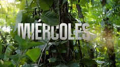 Discovery Channel Latam Rebrand on Behance #composite