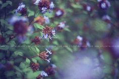 Silent Blossom #silent #blossom #photography #purple #film #blue #flowers