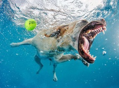 Uderwater Dogs: Creative and Playful Photography by Seth Casteel