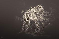 africa-souls-zoo-photography-manuela-kulpa-6 #photography #animals