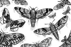Like A Moth to A Flame on Behance #moth #drawing #illustration