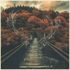The Collective Loop - Playlist-55 Cover art #deer #playlist #fall #cover #art #music