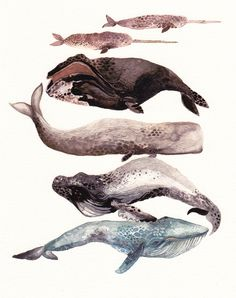 Whales, watercolor #illustration #fish #animals #watercolor #whales