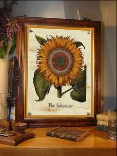 Sun flower vintage illustration print 11 x 14 by AncientShades #botanical #sun #print #vintage #flower