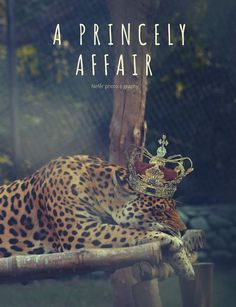A Princely Affair #panther #big cat #wild #forest #nature #beauty #fairy tale