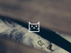 Cat #icon #cat