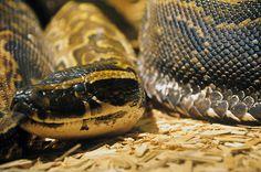 Snake #nature