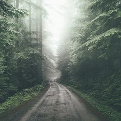 @Fursty #road #fog