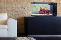 Biota Saltwater Aquarium, an intelligently designed, sustainable fish tank that comes with its own wildlife. Biota presents an easy-to-man