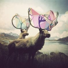 Uut Poetry — Day of Moves It is a day of moves. The moves go... #shape #photo #geometry #color #elk #deer #antlers #animas
