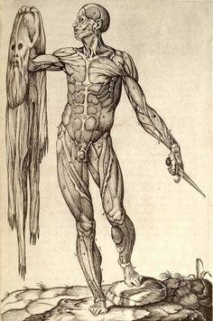 Anatomia_del_corpo_humano.jpg 1200×1802 pixels #muscle #skin #anatomy