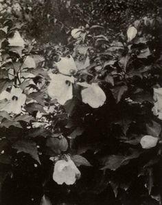 Vidar Sörman #flower